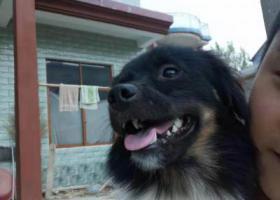 寻狗启示,麻烦各大好心人,谢谢帮一下忙,它是一只非常可爱的宠物狗狗,希望它早日回家,不要变成流浪狗。