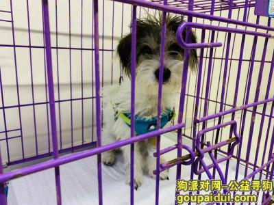 爱犬于2019年10月17日在通州潞苑四海公寓附近走失,它是一只非常可爱的宠物狗狗,希望它早日回家,不要变成流浪狗。