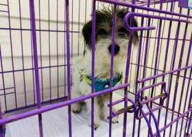 寻狗启示,爱犬于2019年10月17日在通州潞苑四海公寓附近走失,它是一只非常可爱的宠物狗狗,希望它早日回家,不要变成流浪狗。