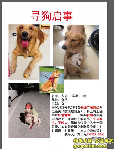 ,寻找爱犬,金毛多多母狗,它是一只非常可爱的宠物狗狗,希望它早日回家,不要变成流浪狗。