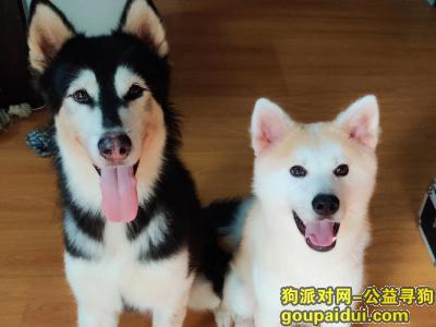 桂林丢狗,桂林市灵川县梧桐墅附近走丢,它是一只非常可爱的宠物狗狗,希望它早日回家,不要变成流浪狗。