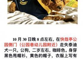 寻狗启示,建国路到青年路附近走失泰迪一只,它是一只非常可爱的宠物狗狗,希望它早日回家,不要变成流浪狗。