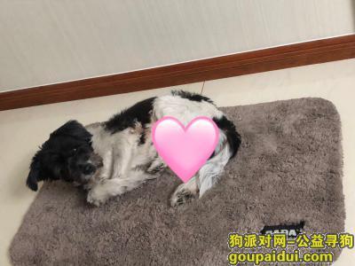 淄博找狗,养了13年的狗走失,望大家帮忙寻找,它是一只非常可爱的宠物狗狗,希望它早日回家,不要变成流浪狗。