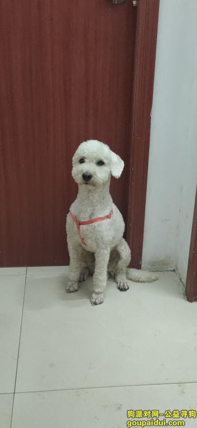 ,11.1号在油田一小附近捡到!,它是一只非常可爱的宠物狗狗,希望它早日回家,不要变成流浪狗。