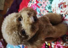 寻狗启示,顺德大良钟楼公园附件走失,重酬,它是一只非常可爱的宠物狗狗,希望它早日回家,不要变成流浪狗。