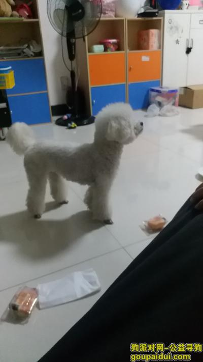 台州寻狗网,急 寻找宠物狗的主人。,它是一只非常可爱的宠物狗狗,希望它早日回家,不要变成流浪狗。