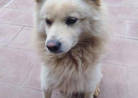 寻狗启示,云茶里白色串种公狗一条,它是一只非常可爱的宠物狗狗,希望它早日回家,不要变成流浪狗。