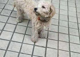寻狗启示,后滘的小哥哥小姐姐帮忙留意下狗子。看到者请联系我微信s786321,它是一只非常可爱的宠物狗狗,希望它早日回家,不要变成流浪狗。