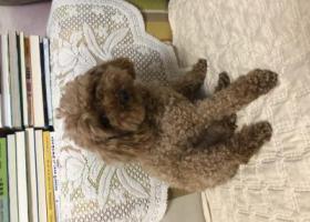 寻狗启示,寻找历下区环山路丢失泰迪狗,它是一只非常可爱的宠物狗狗,希望它早日回家,不要变成流浪狗。