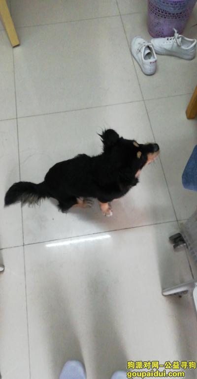 邵阳找狗,邵阳市大祥区邵阳学院七里坪校区女寝28栋有狗,它是一只非常可爱的宠物狗狗,希望它早日回家,不要变成流浪狗。