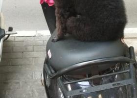 寻狗启示,寻找爱宠黑米,希望好人捡到或收养了请与我联系,我希望,还能见到它,它是一只非常可爱的宠物狗狗,希望它早日回家,不要变成流浪狗。
