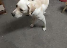 寻狗启示,寻找爱狗看到了请联系我,它是一只非常可爱的宠物狗狗,希望它早日回家,不要变成流浪狗。