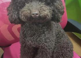 寻狗启示,他是我的家人请各位帮他回家,它是一只非常可爱的宠物狗狗,希望它早日回家,不要变成流浪狗。