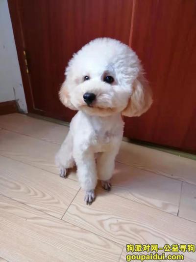 绵阳寻狗启示,四川省绵阳市10.28日晚遗失,它是一只非常可爱的宠物狗狗,希望它早日回家,不要变成流浪狗。