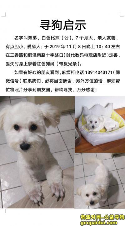 """苏州找狗,寻狗启示,我家比熊""""弟弟""""苏州三香路附近丢失,它是一只非常可爱的宠物狗狗,希望它早日回家,不要变成流浪狗。"""