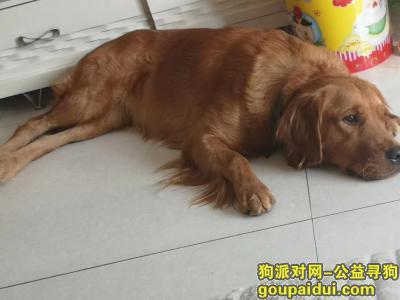 ,很着急,需要大家的帮助,希望大家可以帮忙留意一下,它是一只非常可爱的宠物狗狗,希望它早日回家,不要变成流浪狗。
