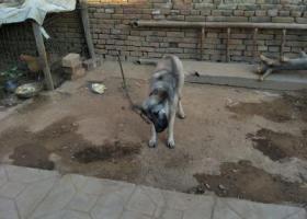 寻狗启示,有看到必有重谢,qq1320359831,它是一只非常可爱的宠物狗狗,希望它早日回家,不要变成流浪狗。