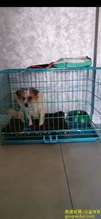 株洲寻狗主人,给狗狗寻主人,让她早日回家,它是一只非常可爱的宠物狗狗,希望它早日回家,不要变成流浪狗。