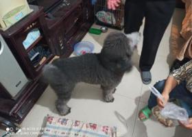 寻狗启示,宠物狗找主人  盘龙区世博园片区,它是一只非常可爱的宠物狗狗,希望它早日回家,不要变成流浪狗。