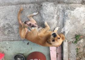 寻狗启示,狗狗2019、11、12在佛山大道乐安路段走失,它是一只非常可爱的宠物狗狗,希望它早日回家,不要变成流浪狗。
