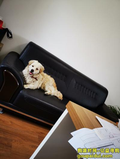 六安寻狗,希望旺旺早些找到回家的路,它是一只非常可爱的宠物狗狗,希望它早日回家,不要变成流浪狗。