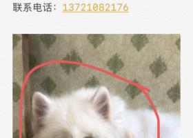 寻狗启示,寻10年的萨摩耶一条!,它是一只非常可爱的宠物狗狗,希望它早日回家,不要变成流浪狗。