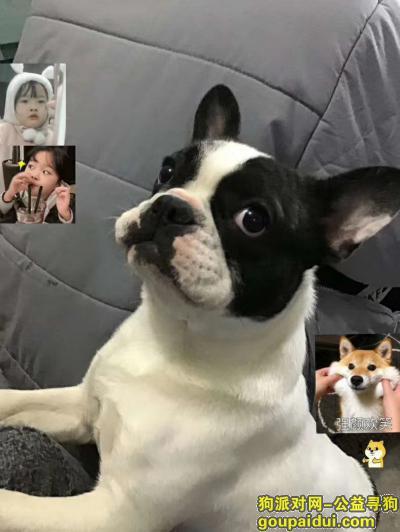 南通找狗,白色多有几个块黑色法斗,它是一只非常可爱的宠物狗狗,希望它早日回家,不要变成流浪狗。