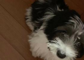 寻狗启示,寻狗启示,串串四五个月大,它是一只非常可爱的宠物狗狗,希望它早日回家,不要变成流浪狗。