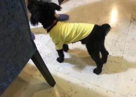寻狗启示,重金求15日晚上丢失的黑狗,它是一只非常可爱的宠物狗狗,希望它早日回家,不要变成流浪狗。