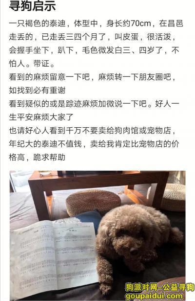 潍坊寻狗,山东昌邑寻褐色泰迪。,它是一只非常可爱的宠物狗狗,希望它早日回家,不要变成流浪狗。