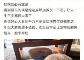 寻狗启示,山东昌邑寻褐色泰迪。,它是一只非常可爱的宠物狗狗,希望它早日回家,不要变成流浪狗。