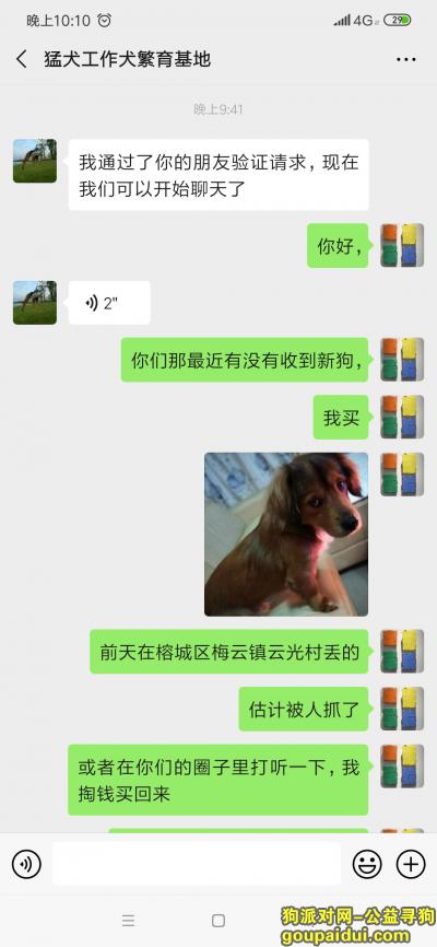 ,大家帮帮忙,帮我留意一下,它是一只非常可爱的宠物狗狗,希望它早日回家,不要变成流浪狗。