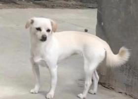 寻狗启示,合肥市包河区方兴大道重酬一万元寻找爱犬,它是一只非常可爱的宠物狗狗,希望它早日回家,不要变成流浪狗。