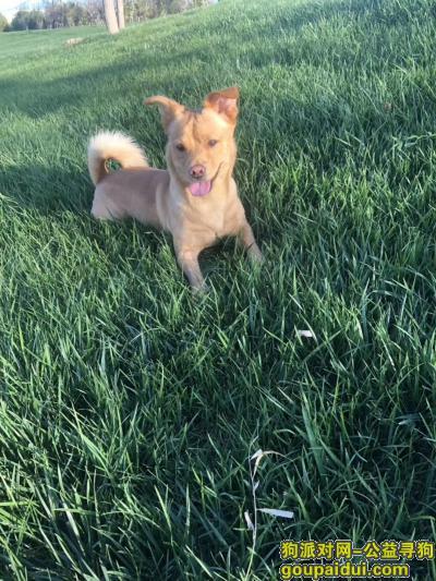 ,廊坊市西小区德仁新儒苑狗狗走丢,它是一只非常可爱的宠物狗狗,希望它早日回家,不要变成流浪狗。