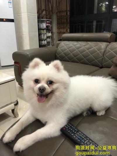 泉州找狗,狗狗丢了,求好心人帮忙,它是一只非常可爱的宠物狗狗,希望它早日回家,不要变成流浪狗。