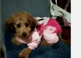 寻狗启示,爱犬于2019年11月16日在浙江省宁波市慈溪市横河菜市场附近走失。,它是一只非常可爱的宠物狗狗,希望它早日回家,不要变成流浪狗。