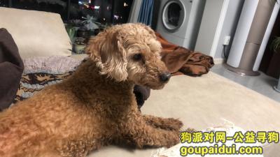 马鞍山寻狗网,尾随我进家的串串小型狗,它是一只非常可爱的宠物狗狗,希望它早日回家,不要变成流浪狗。