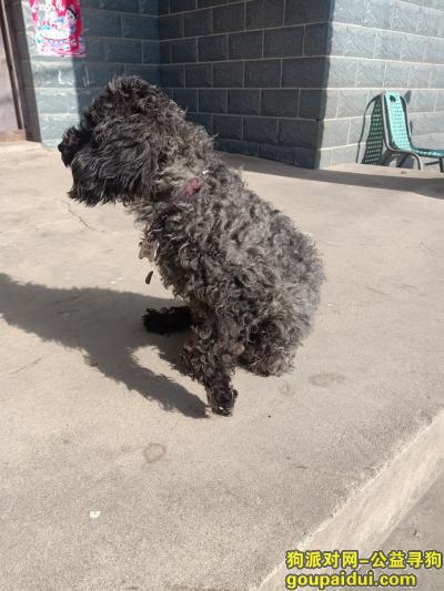 湖州找狗,这只泰迪是我在高速上捡到的,身上有狗狗休息牌,它是一只非常可爱的宠物狗狗,希望它早日回家,不要变成流浪狗。