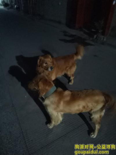 南通寻狗启示,金毛狗狗叫闹闹,希望好心人帮助,必有重谢17625203982,它是一只非常可爱的宠物狗狗,希望它早日回家,不要变成流浪狗。