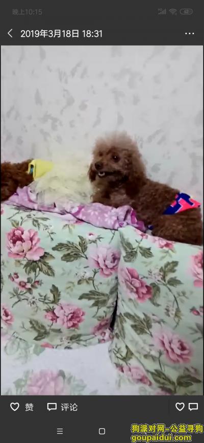 唐山寻狗启示,天冷了,泰迪宝宝想回家,别在流浪了,妈妈找的你好辛苦,它是一只非常可爱的宠物狗狗,希望它早日回家,不要变成流浪狗。