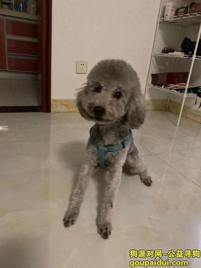 寻狗启示,西安市华南城谢一村寻狗启示,它是一只非常可爱的宠物狗狗,希望它早日回家,不要变成流浪狗。