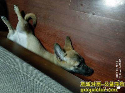 寻狗启示,狗狗走丢了,心里空落落的,它是一只非常可爱的宠物狗狗,希望它早日回家,不要变成流浪狗。