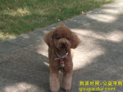 ,小小,天气冷了快回来吧!,它是一只非常可爱的宠物狗狗,希望它早日回家,不要变成流浪狗。