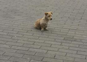 寻狗启示,国展站出入口寻找主人,它是一只非常可爱的宠物狗狗,希望它早日回家,不要变成流浪狗。