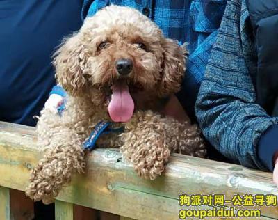 株洲找狗,维尼,天冷了快回家吧!全家都想你!,它是一只非常可爱的宠物狗狗,希望它早日回家,不要变成流浪狗。