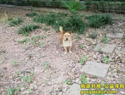 株洲丢狗,这几天楼下花园竹子丛中住了一只狗,它是一只非常可爱的宠物狗狗,希望它早日回家,不要变成流浪狗。