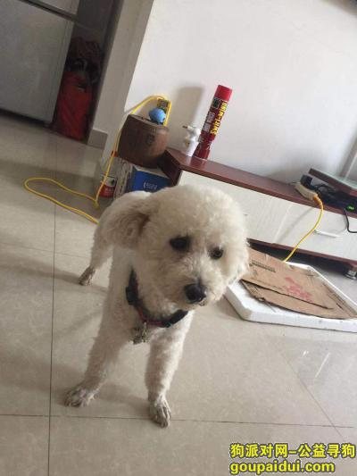 ,找到必重谢,三年了,就像亲人一样,它是一只非常可爱的宠物狗狗,希望它早日回家,不要变成流浪狗。