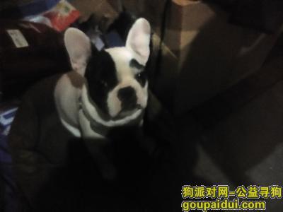 常州丢狗,一只想回家的黑白花牛牛,它是一只非常可爱的宠物狗狗,希望它早日回家,不要变成流浪狗。