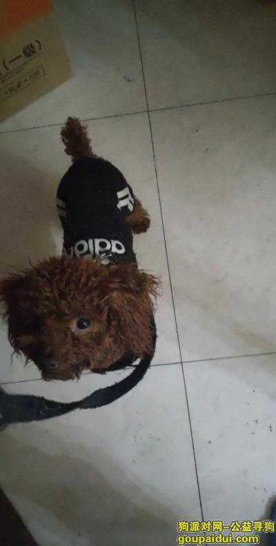 宁波找狗,泰迪豆豆在2019年11月24日18点于永达东路上走失,望好心人看到帖子能联系我,谢谢,它是一只非常可爱的宠物狗狗,希望它早日回家,不要变成流浪狗。