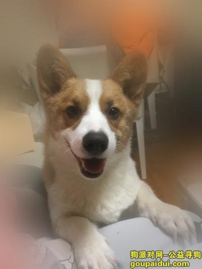 青岛捡到狗,李沧区下街捡到一只狗子,它是一只非常可爱的宠物狗狗,希望它早日回家,不要变成流浪狗。